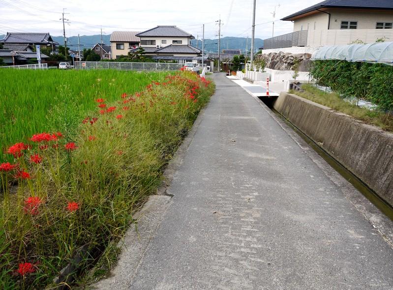彼岸花咲く里山を行く_b0093754_01087.jpg