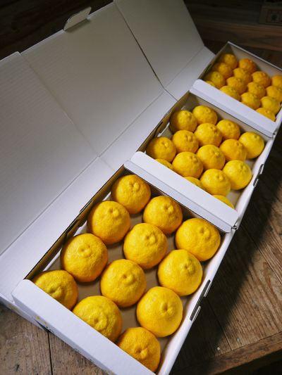 香り高き柚子(ゆず) 最旬!『青柚子』大好評発売中!色づいたゆずは今年も11月上旬からの販売です!_a0254656_20264918.jpg