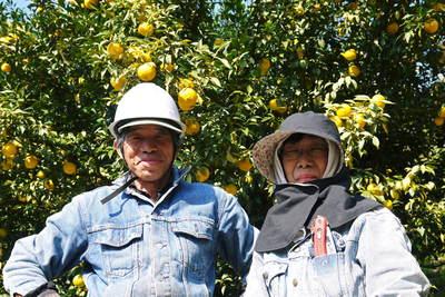 香り高き柚子(ゆず) 最旬!『青柚子』大好評発売中!色づいたゆずは今年も11月上旬からの販売です!_a0254656_2036155.jpg