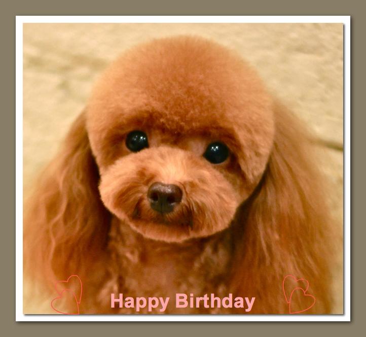 Happy Birthday モカちゃん♡_d0060413_17551789.jpg