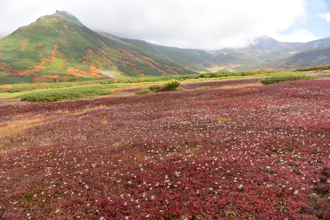 """2016年9月 『赤に染まる大雪山』 September 2016 \""""Red Mountains\""""_c0219616_18255998.jpg"""