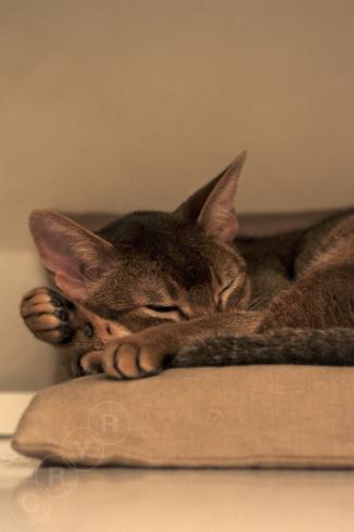 [猫的]眠たい指数_e0090124_22575869.jpg