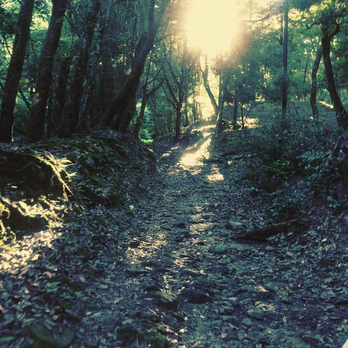 10/9 春日の森 散歩の会_d0210537_1225534.jpg