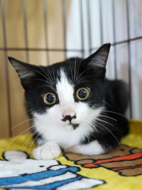 猫のお留守番 にこくん編。_a0143140_1941839.jpg