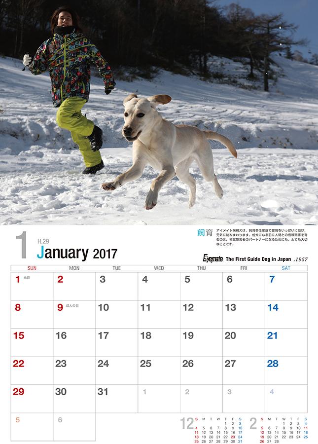 2017 アイメイト60周年 アイメイトサポートカレンダー 販売開始_d0323943_22165206.jpg