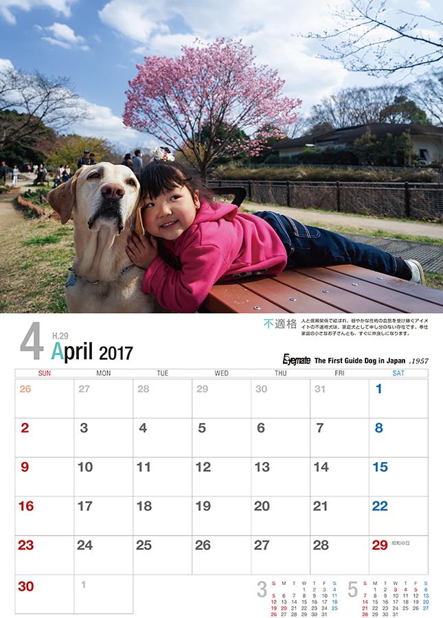 2017 アイメイト60周年 アイメイトサポートカレンダー 販売開始_d0323943_22474996.jpg