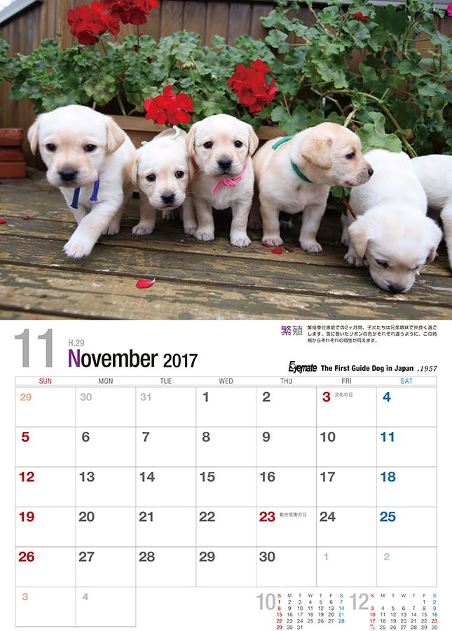 2017 アイメイト60周年 アイメイトサポートカレンダー 販売開始_d0323943_23562951.jpg
