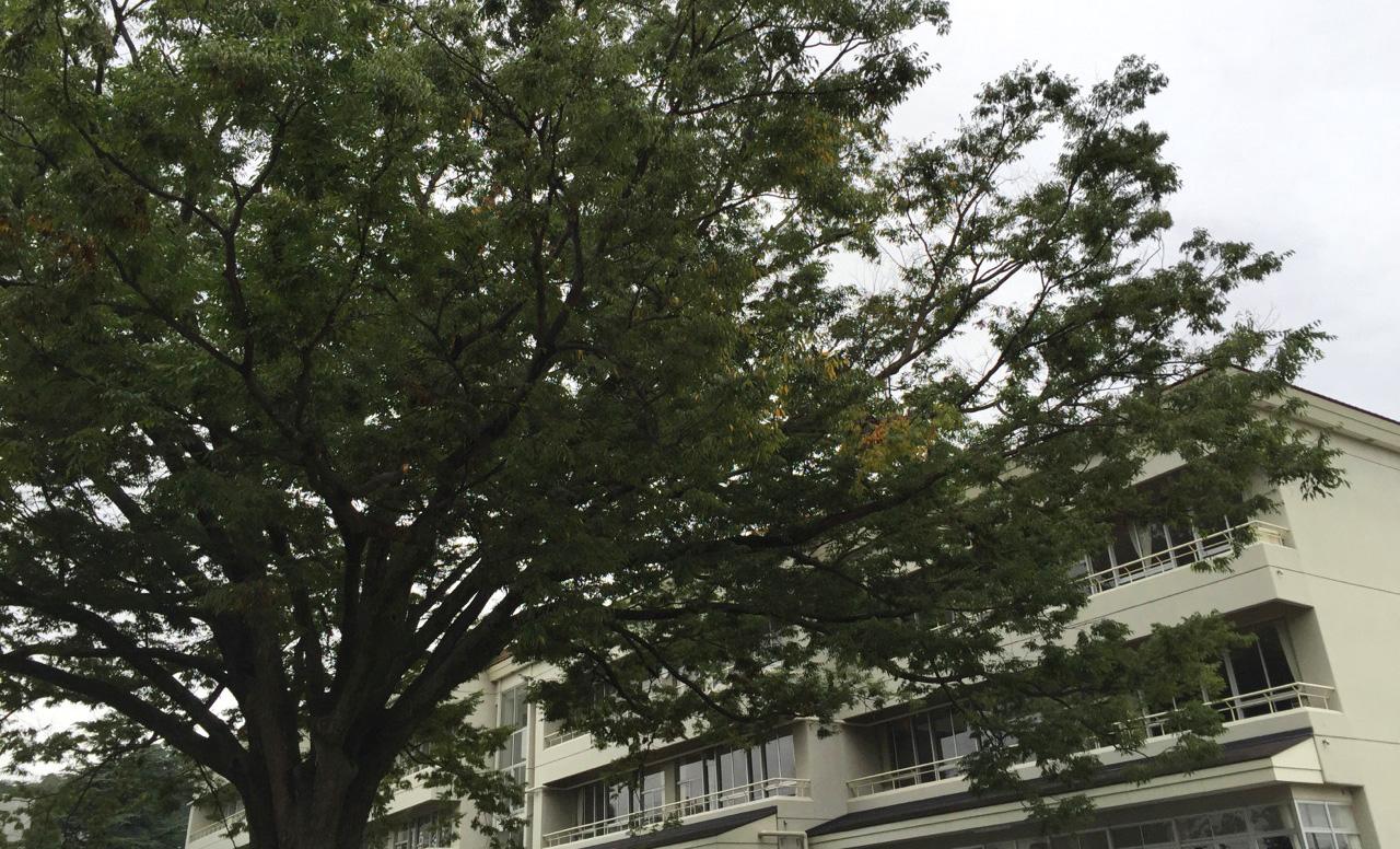運動会_e0127948_030852.jpg