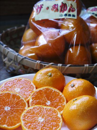 究極の柑橘「せとか」 樹勢も良く今年は収量アップの予感!匠の技で、美しく、大きく、美味しく育てます!_a0254656_20114240.jpg