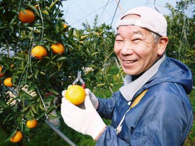 究極の柑橘「せとか」 樹勢も良く今年は収量アップの予感!匠の技で、美しく、大きく、美味しく育てます!_a0254656_208326.jpg