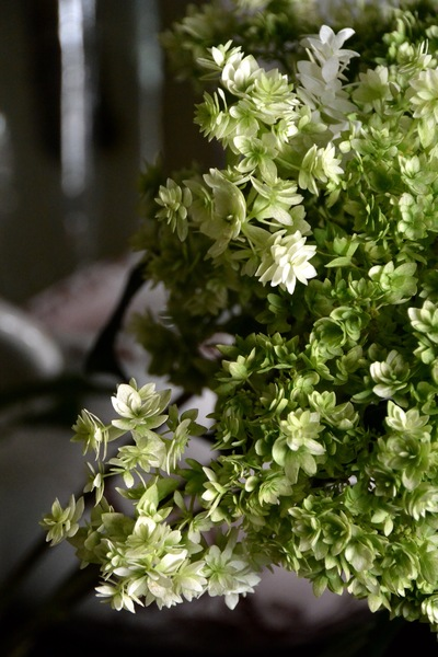 ご注文のお花たち。。。_a0229658_9323776.jpg