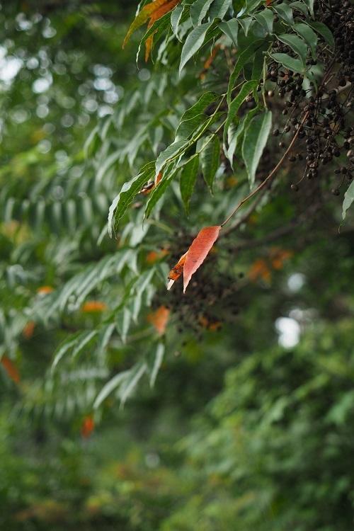 秋をみつけた_a0292060_23113454.jpg