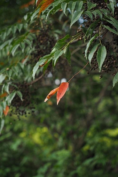 秋をみつけた_a0292060_23115645.jpg
