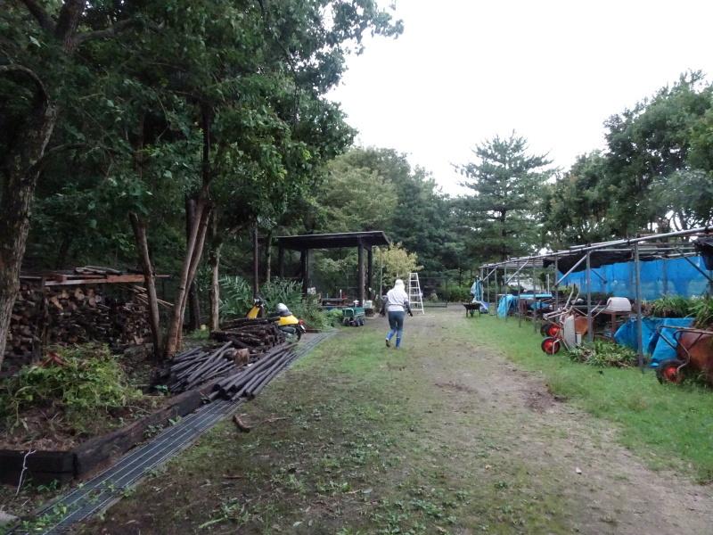 せっかく集まったが雨で作業中断・・・うみべの森_c0108460_16243991.jpg