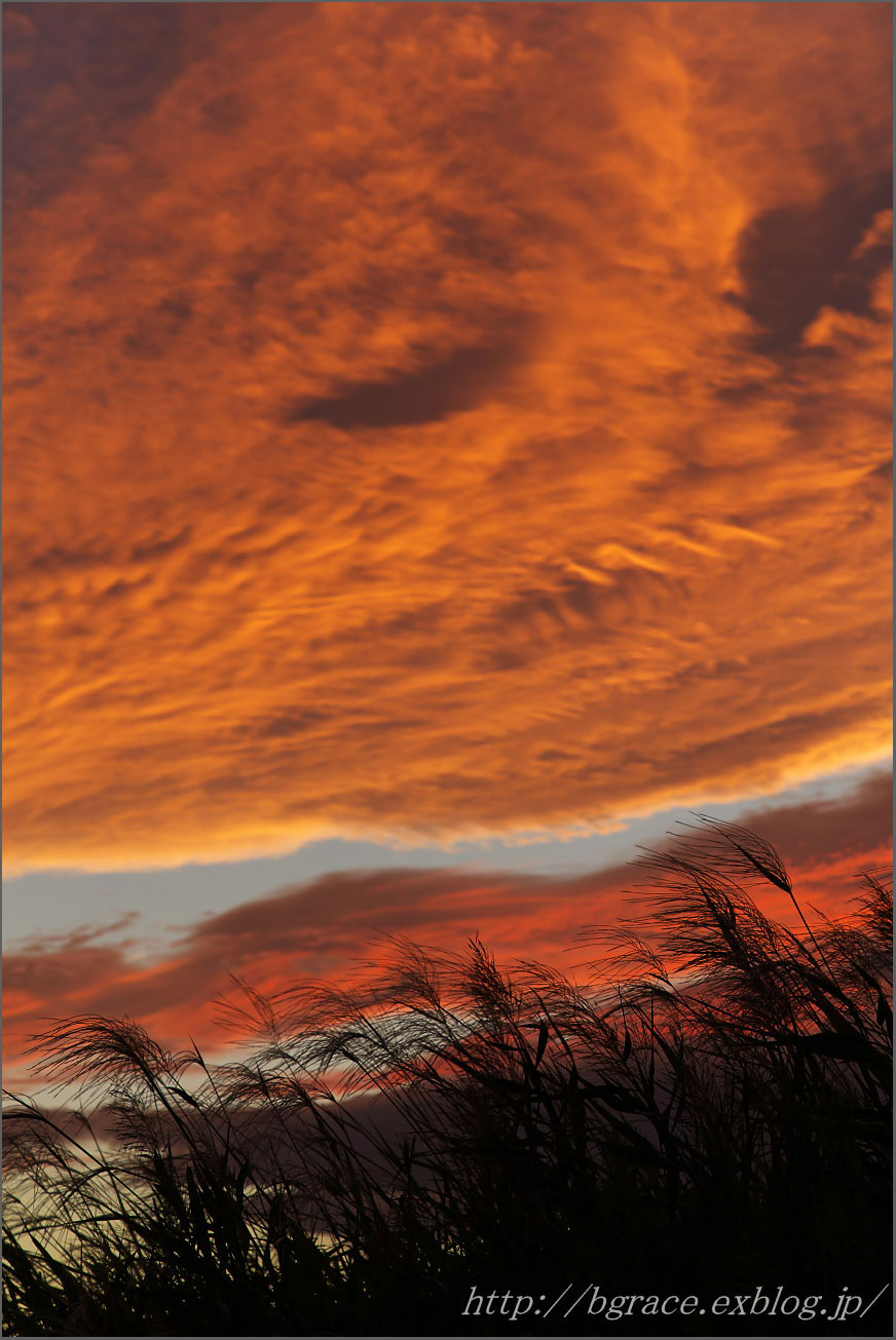 夕焼けに染まる_b0191074_22244255.jpg