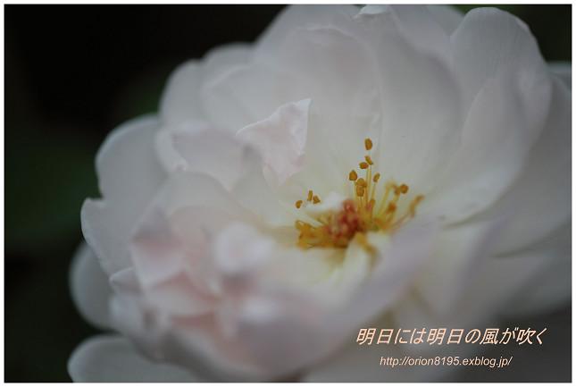 f0361079_18313872.jpg