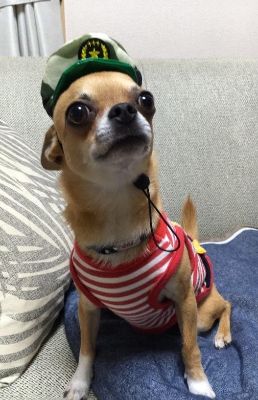 愛犬ぴょん_c0340785_15240259.jpg