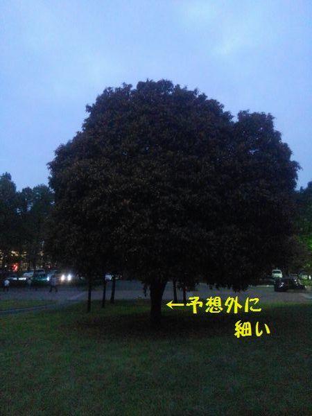 d0224111_19090221.jpg