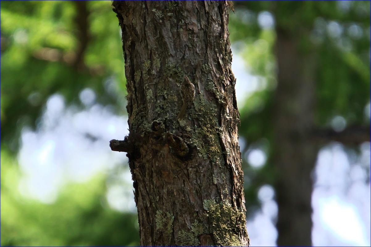 奥日光の野鳥たち・2016年8月編_d0137627_23513984.jpg