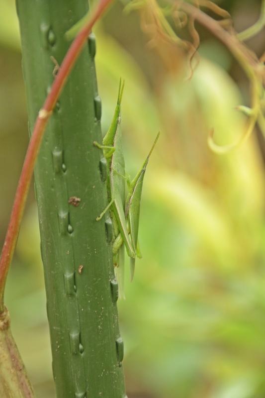 虫の世界を覗いてみました(^^♪_e0052135_18180006.jpg