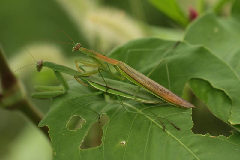 虫の世界を覗いてみました(^^♪_e0052135_18180931.jpg