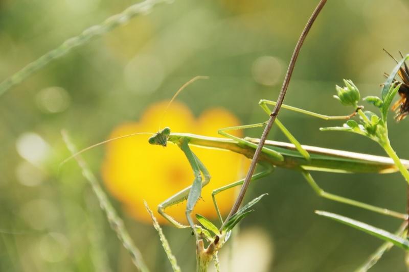 虫の世界を覗いてみました(^^♪_e0052135_18181751.jpg
