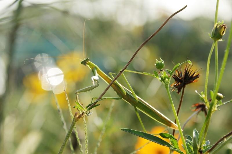 虫の世界を覗いてみました(^^♪_e0052135_18182457.jpg