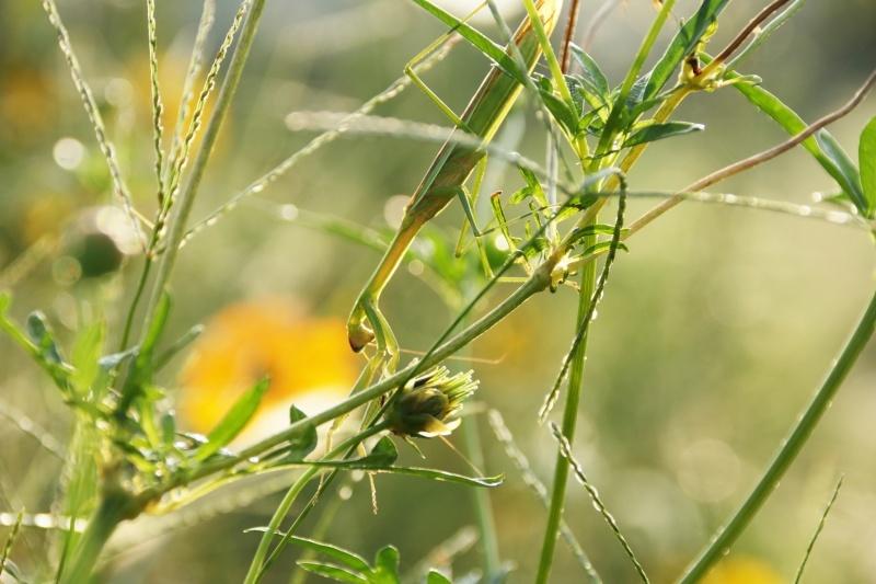 虫の世界を覗いてみました(^^♪_e0052135_18183124.jpg