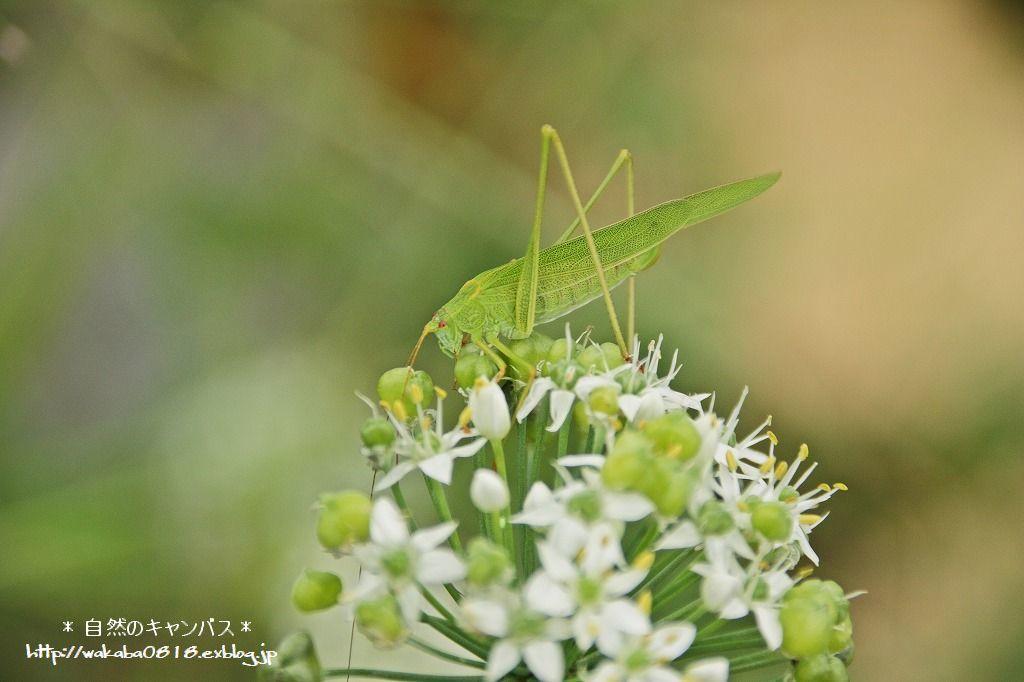 虫の世界を覗いてみました(^^♪_e0052135_18183666.jpg