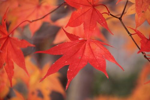 今年の紅葉はどうかなぁ 9月30日_f0113639_14182320.jpg
