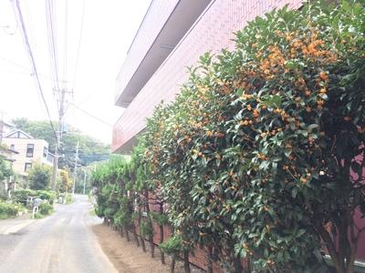 秋の香_a0078344_16343019.jpg