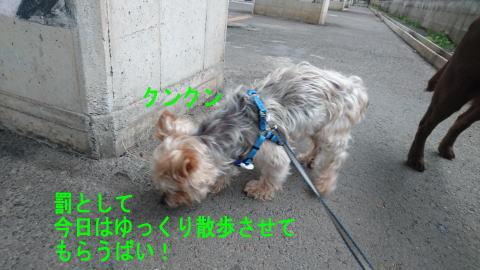 d0013645_18564327.jpg