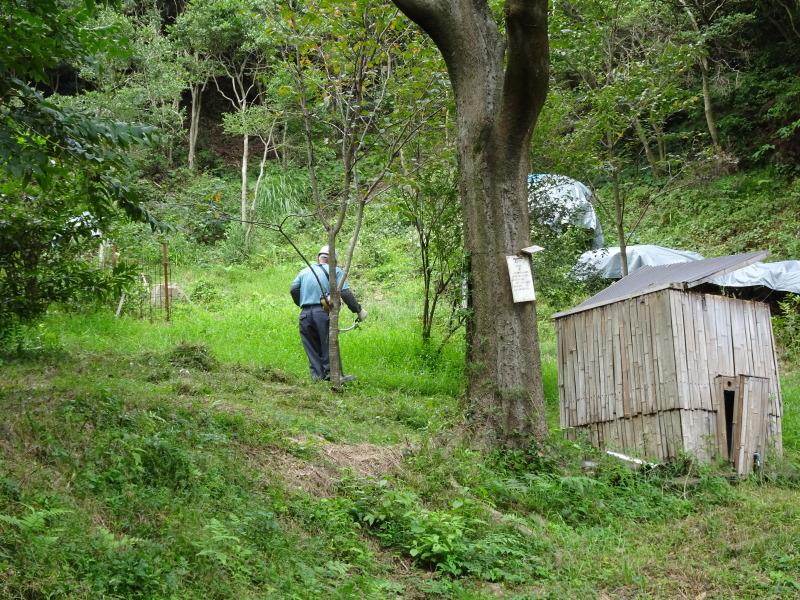 犬飼谷峠道入口周辺の草刈り・・・孝子の森_c0108460_18271132.jpg