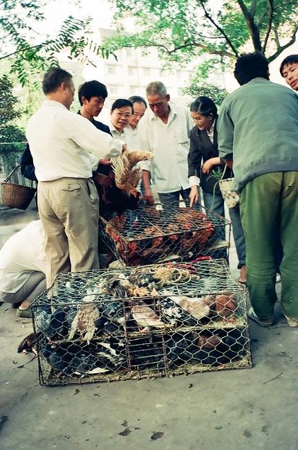 旧拍新掃描「86北京92杭州・鶏を売り買いする」_c0182775_1740281.jpg