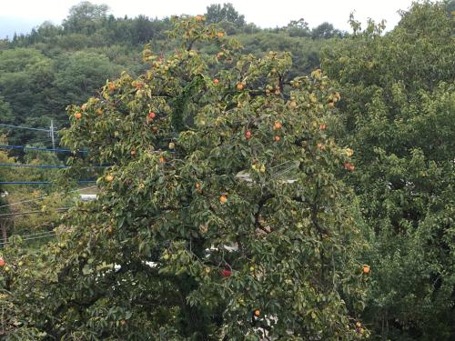 秋の色は柿の実から_d0338282_15342720.jpg