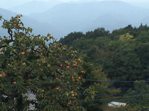 秋の色は柿の実から_d0338282_15342817.jpg