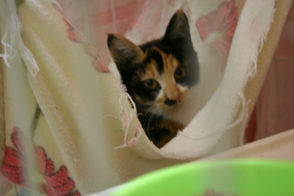 【移動先募集】センター(本所)収容猫(9/24訪問)_f0242002_00530218.jpg