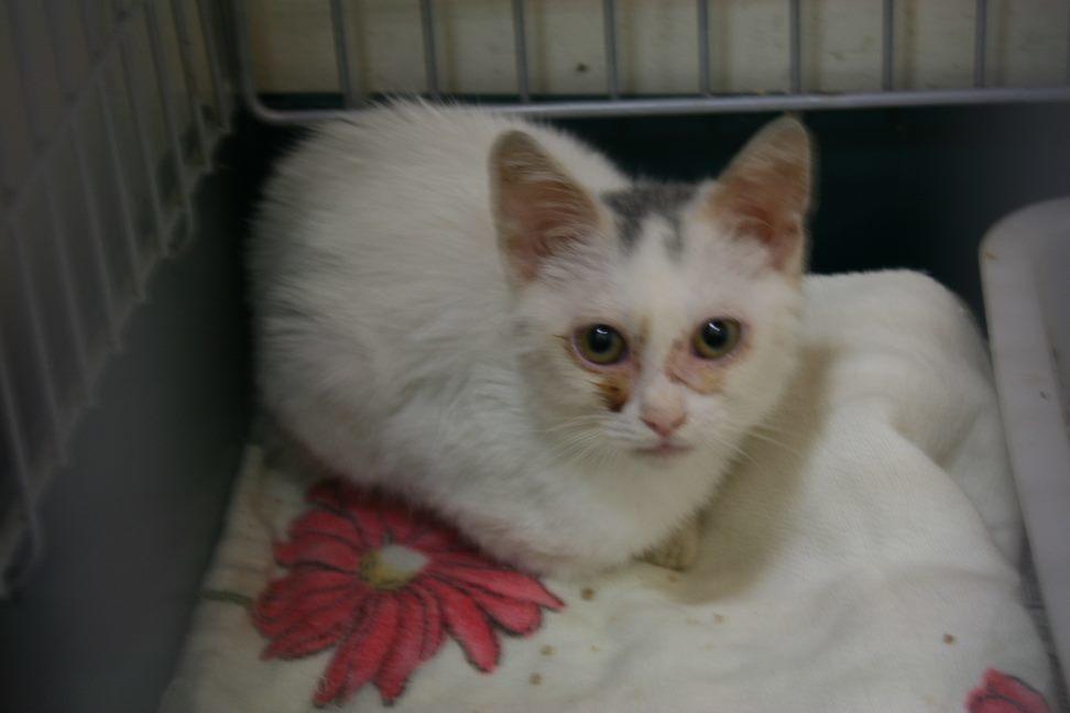 【移動先募集】センター(本所)収容猫(9/24訪問)_f0242002_00534581.jpg