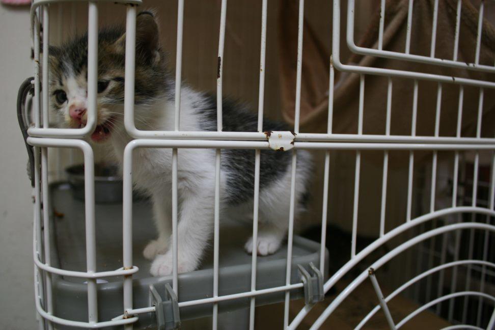【移動先募集】センター(本所)収容猫(9/24訪問)_f0242002_00535312.jpg