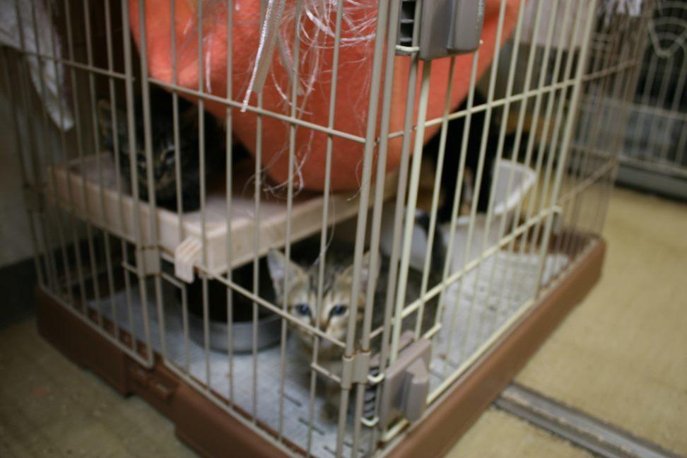 【移動先募集】センター(本所)収容猫(9/24訪問)_f0242002_00540068.jpg