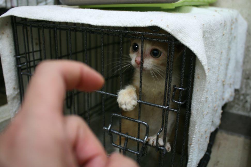 【移動先募集】センター(本所)収容猫(9/24訪問)_f0242002_00551647.jpg