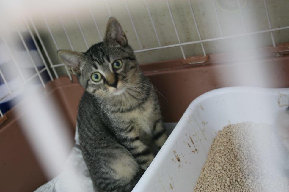 【移動先募集】センター(本所)収容猫(9/24訪問)_f0242002_00554043.jpg