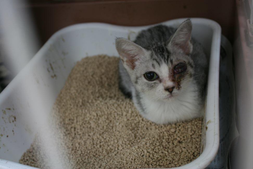 【移動先募集】センター(本所)収容猫(9/24訪問)_f0242002_00554505.jpg