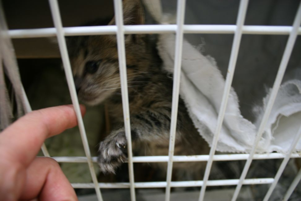 【移動先募集】センター(本所)収容猫(9/24訪問)_f0242002_00560036.jpg