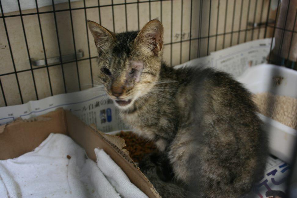 【移動先募集】センター(本所)収容猫(9/24訪問)_f0242002_00561427.jpg