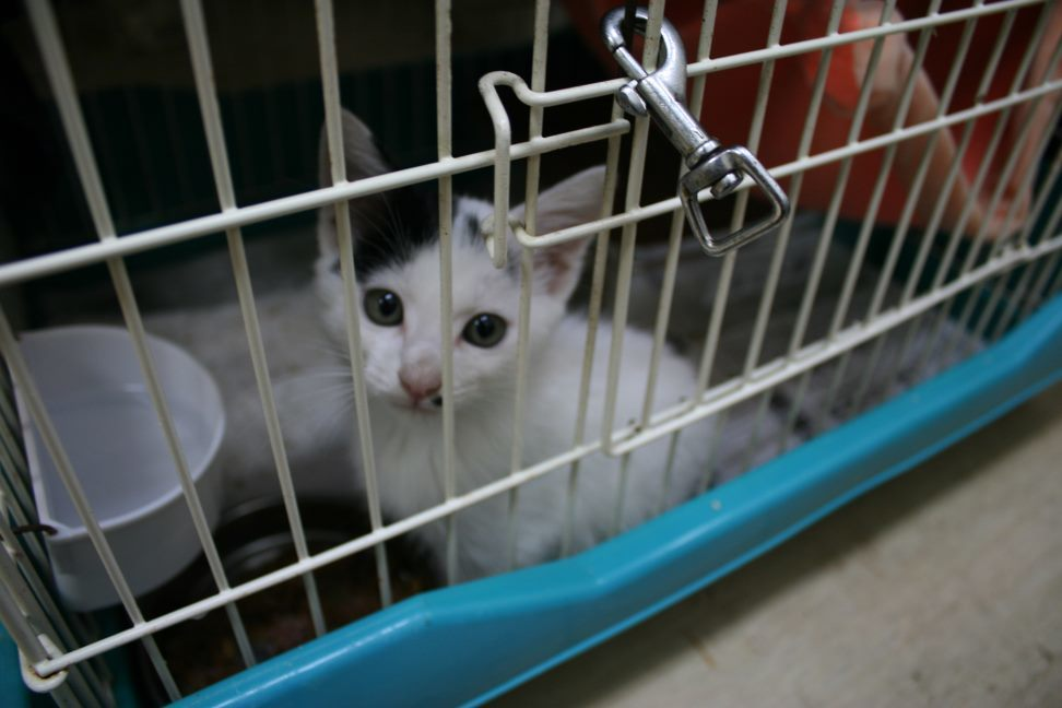 【移動先募集】センター(本所)収容猫(9/24訪問)_f0242002_00563786.jpg