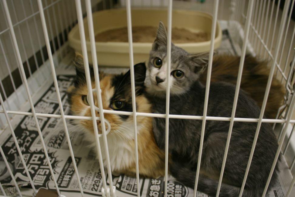 【移動先募集】センター(本所)収容猫(9/24訪問)_f0242002_00581264.jpg