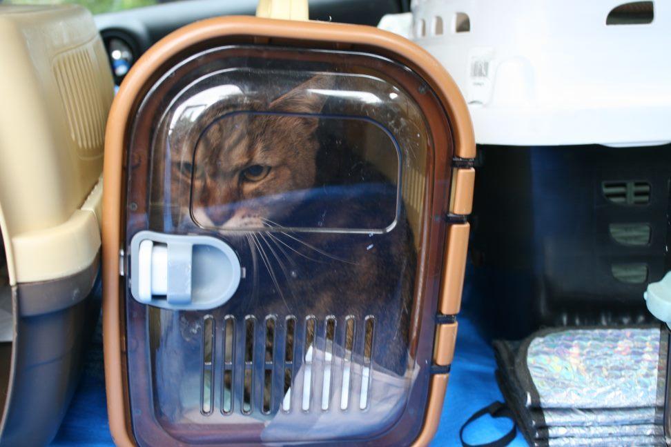 【移動先募集】センター(本所)収容猫(9/24訪問)_f0242002_00590367.jpg