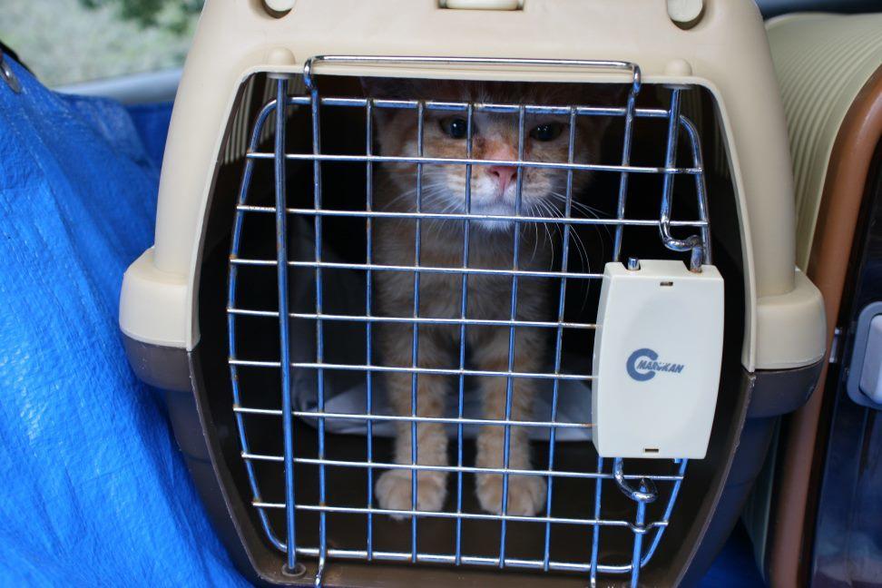 【移動先募集】センター(本所)収容猫(9/24訪問)_f0242002_00590928.jpg