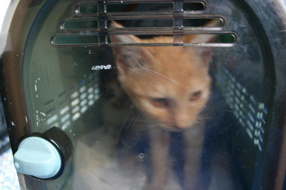 【移動先募集】センター(本所)収容猫(9/24訪問)_f0242002_00591401.jpg